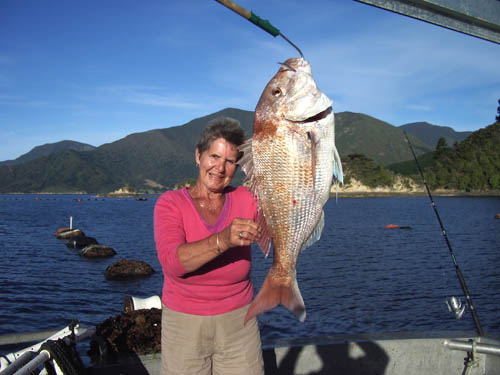 fishing marlborough sounds